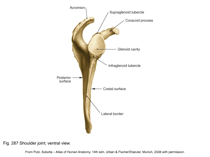 Inferior Lateral Angle