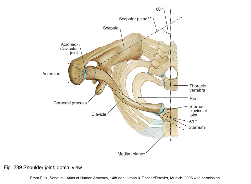 Applied Anatomy Of The Shoulder Girdle Clinical Gate