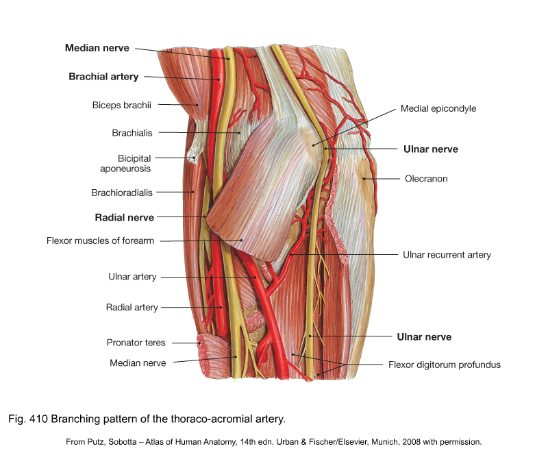 Applied anatomy of the elbow