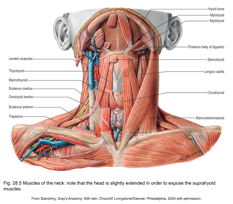 Applied anatomy of the shoulder girdle