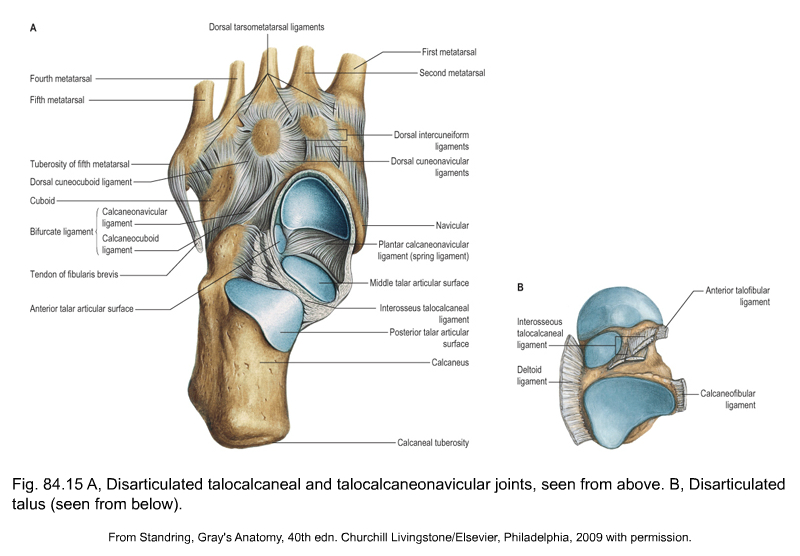 Applied anatomy of the lower leg, ankle and foot